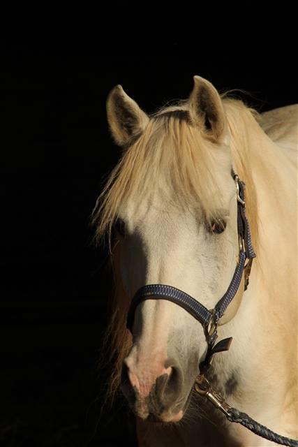 Pferdepartner Franken Ev